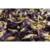 Butterfly-Pea Tea  (Blauer Schamblumen Tee)